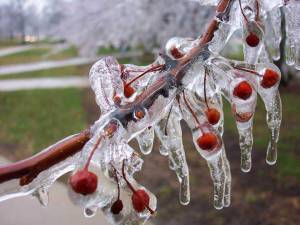 smrznuto proljeće